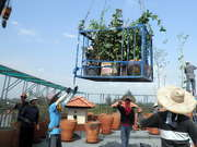 Receiving Climbing Plants On The Roof Deck